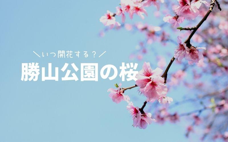 小倉城(勝山公園)桜の開花状況-TOP