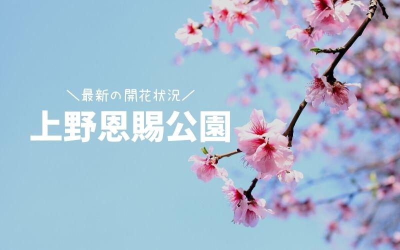 上野恩賜公園-桜の開花状況
