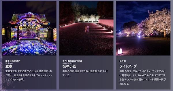 二条城桜まつり-ライトアップ2
