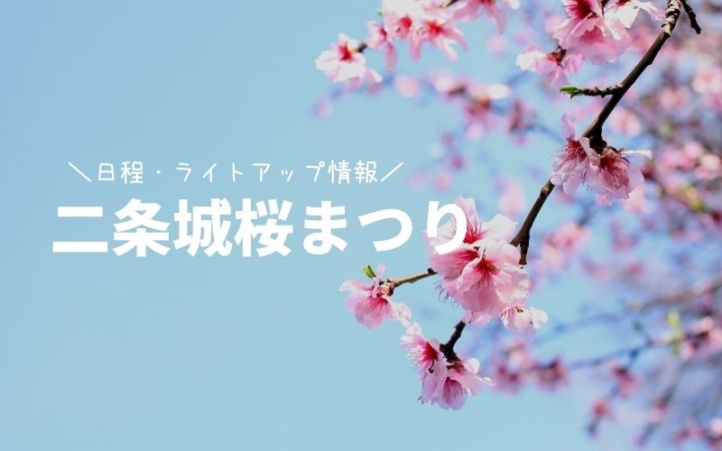 二条城桜まつり-桜見頃