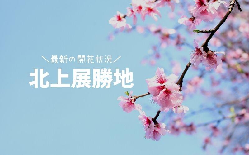 北上展勝地-桜の見頃と開花状況