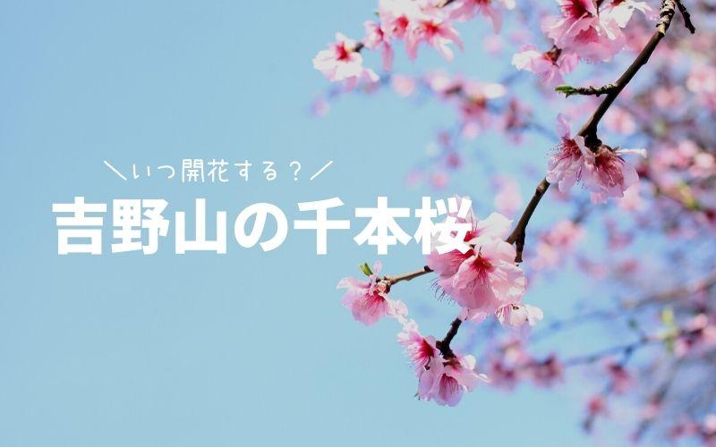 吉野山-桜