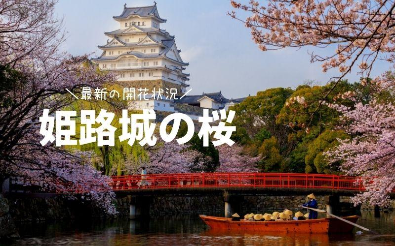 姫路城の桜の見頃・ライトアップ情報