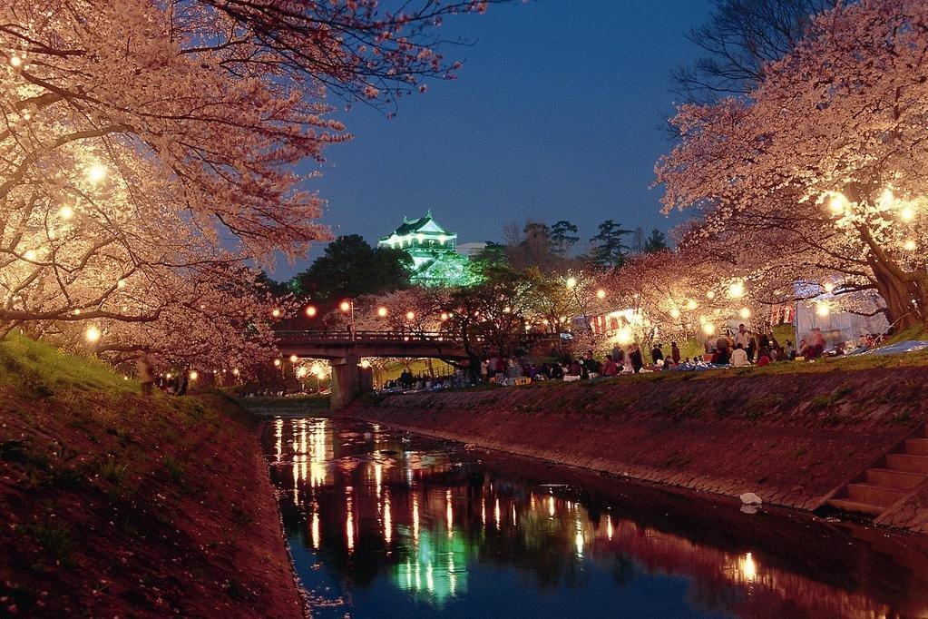 岡崎の桜まつりライトアップ