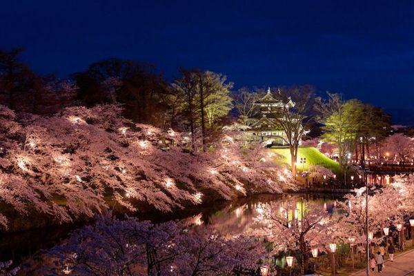高田城址公園観桜会-ライトアップ